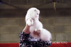 International Cat Show - November 2014 (Milan Italy) by Serenisima Cat Club
