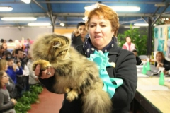World Cat Show of Zanika (Italy) - February 2015
